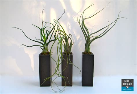 Art To Decorate Your Home tillandsia for the minimalist craft organic