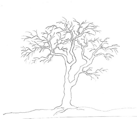 tree drawing simple by marcy simple pencil drawing of a tree