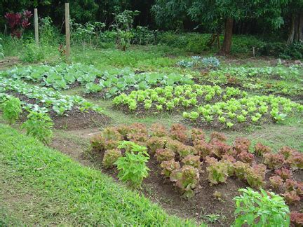organic gardening at barefooters library