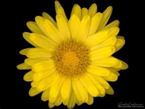 Flower Pic by Flower Power Flowers Wallpaper 247555 Fanpop