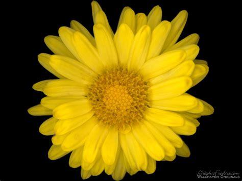 flower image presentations by jamison leonard speaker deck