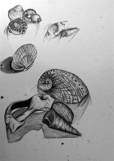 Sketches Exles by Gcse Sketchbook Drawing Shells Ed