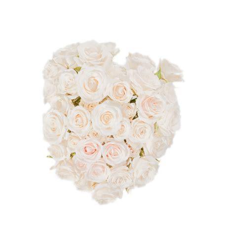 Sprei White white majolica spray roses flower muse