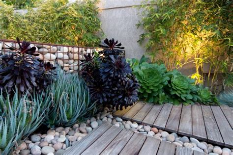 growing succulents outdoors diy