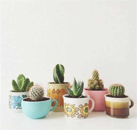 cactus in coffee mugs diy to try pinterest boho