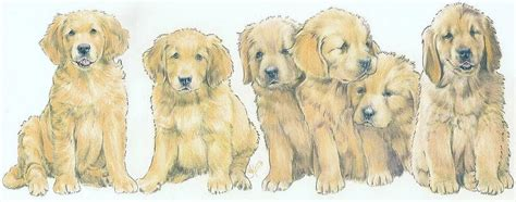 golden retriever puppy drawing golden retriever puppies drawing by barbara keith