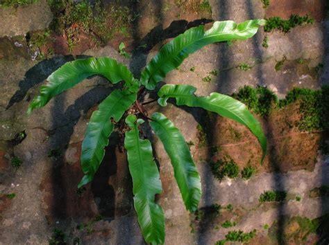 conservation biologist plant   week harts