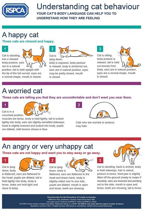 understanding cat behaviour behaviour cats