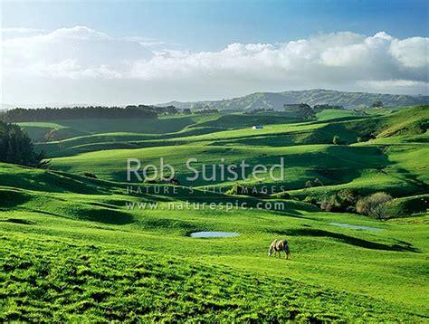 I Photography Raglan early morning lush raglan farmland raglan waikato