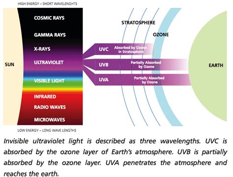 what can a uv light be used for henry s home hummingbird facts