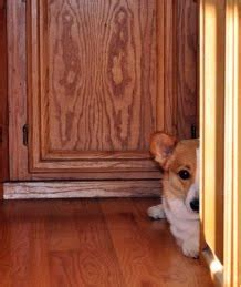 dogs nails scratching hardwood floors responsible pet ownership how to stop dogs from