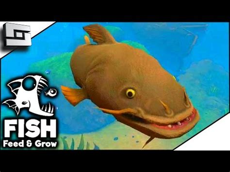 catfish river! fish feed and grow [download and play]
