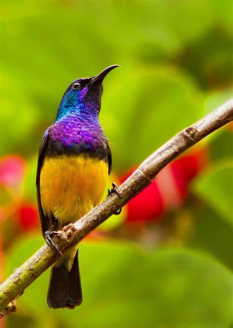 the sunbird sunbird my animals