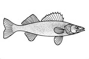 Mobile/walleye Fish Drawing Sketch Coloring Page sketch template