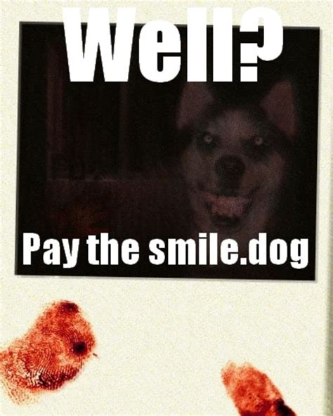 Know Your Meme Dog - smile dog meme memes