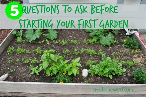Garden Of Questions 5 Questions To Ask Before Starting Your Garden