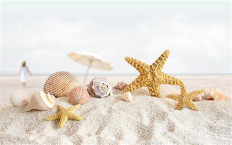 shell wallpaper wallpapers starfish wallpapers