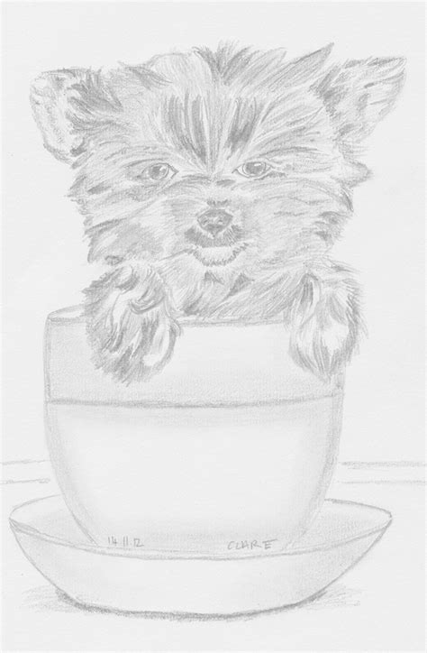 how to a teacup yorkie how to draw a yorkie book covers
