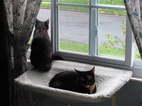 petsmart cat window seat cat window perch target window hammock for cat outside