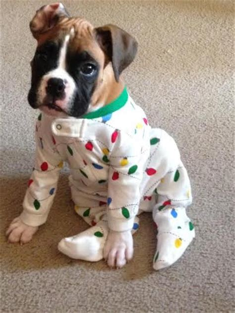puppy in onesie puppies in onesies fuzzfeed