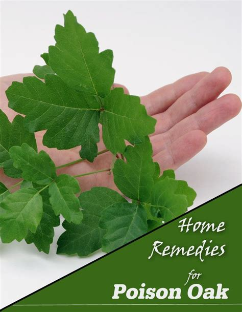 home remedies for poison oak poison oak home remedies