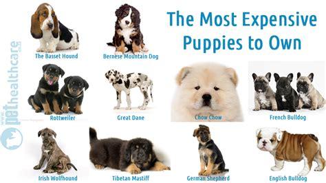 most expensive breeds most expensive breeds in america