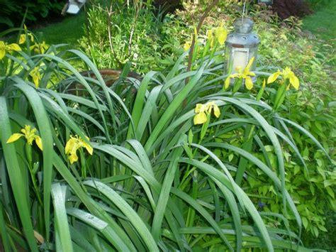 wet plants for garden gb lawncare