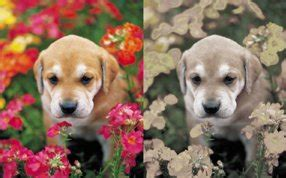how do dogs see color vision what colors can dogs see and can they see in