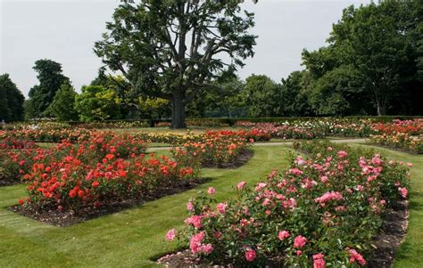 picture of garden the rose garden greenwich park the royal parks