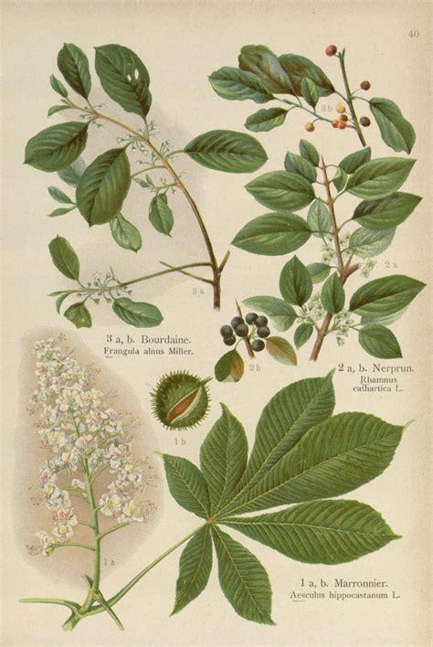 Botanic Botanical Botanical Prints Rosemary S