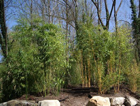 grosse pflanzentöpfe bildergeschichte der g 228 rtnerei hofstetter m 252 hle bambus
