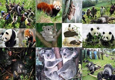 imagenes de animales nuevas especies especies en extinci 211 n animales en peligro de extincion