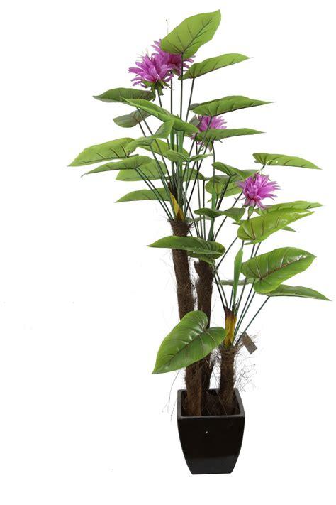 Decorative Indoor Plants by China Calla Decorative House Calla Plant Jtla 0010