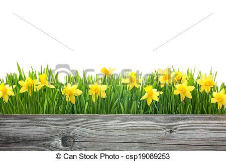 fotografie di fiori primaverili fiori primaverili tromboni fiori spazio primavera