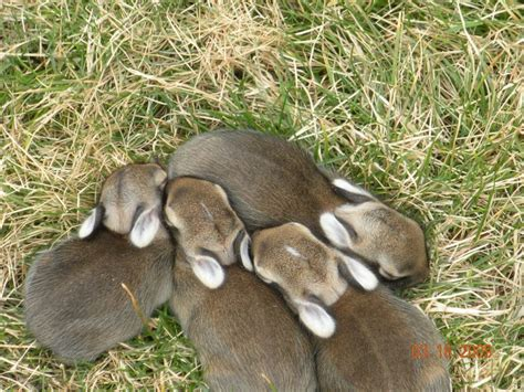 baby bunnies in my backyard wordless wednesday baby bunnies in my yard my fruitful