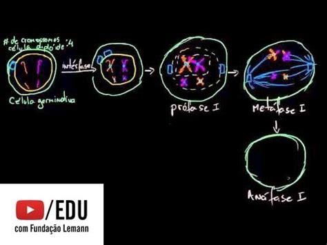 anna mitose e meiose anafase 1 buzzpls com