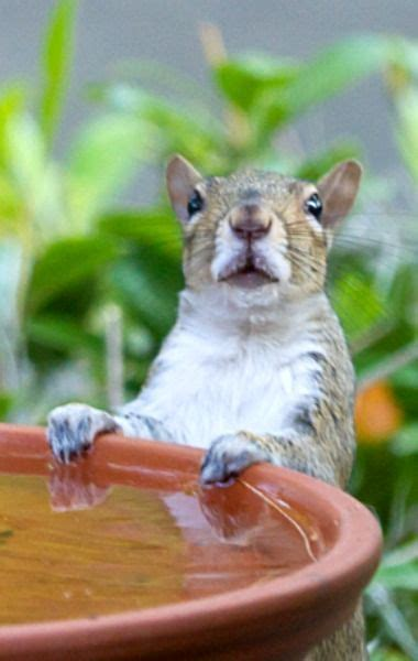 well the squirrels are back commercial script 1898 best animals squirrels images on pinterest