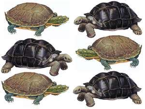 what's the difference between a turtle and a tortoise
