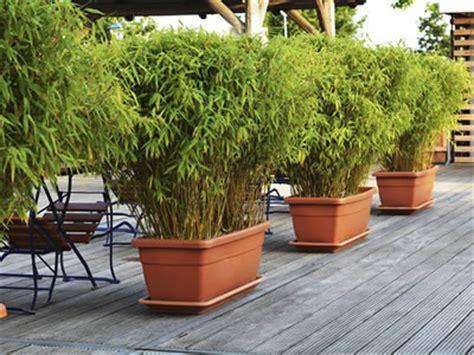 piante da terrazzo impatiens impatiens walleriana e ibridi giardinaggio mobi