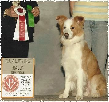 toryglen golden retrievers rising border collies casey rally 4 19 08