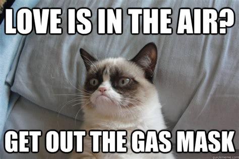 Grumpy Cat Love Meme - cambridge public library teen room