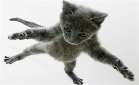 How To Stop A Cat From Jumping On Furniture by If You Think Your Cat Can Jump Wait Until You See These