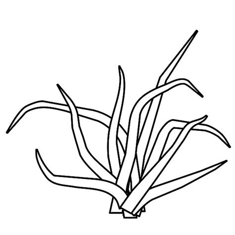 grass grow   coloring pages color luna