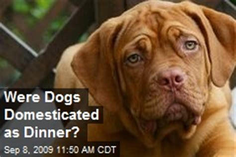 when were dogs domesticated anthropology news stories about anthropology page 1 newser