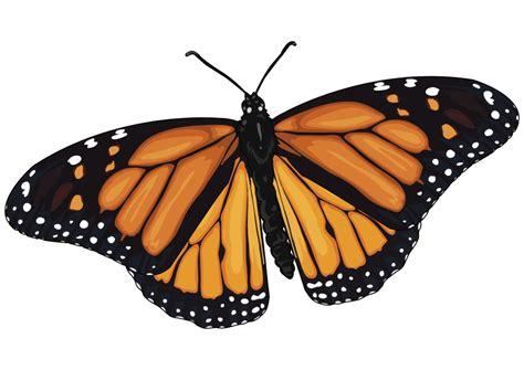 imagenes en png de mariposas 161 conoce a la mariposa monarca el dictamen