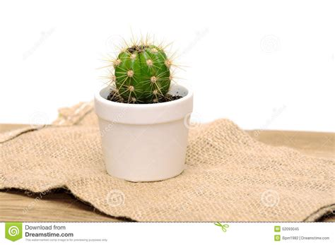 small potted cactus plants stock photo image 68600366 small decorative cactus in a pot stock photo image 52093045