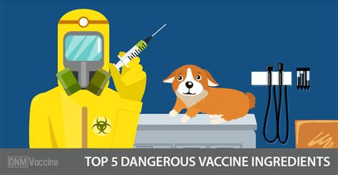 5 in 1 vaccine for dogs top 5 dangerous vaccine ingredients 1 dogs naturally magazine