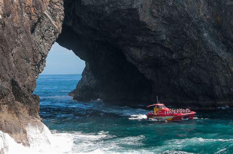 fast boat new zealand fast boat hole in the rock bay of islands mack attack