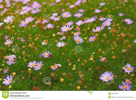 wildflowers that bloom in the fall wildflower meadow background royalty free stock image