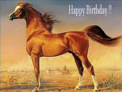 Horse Birthday Meme - 102 best images about horse birthday quotes on pinterest